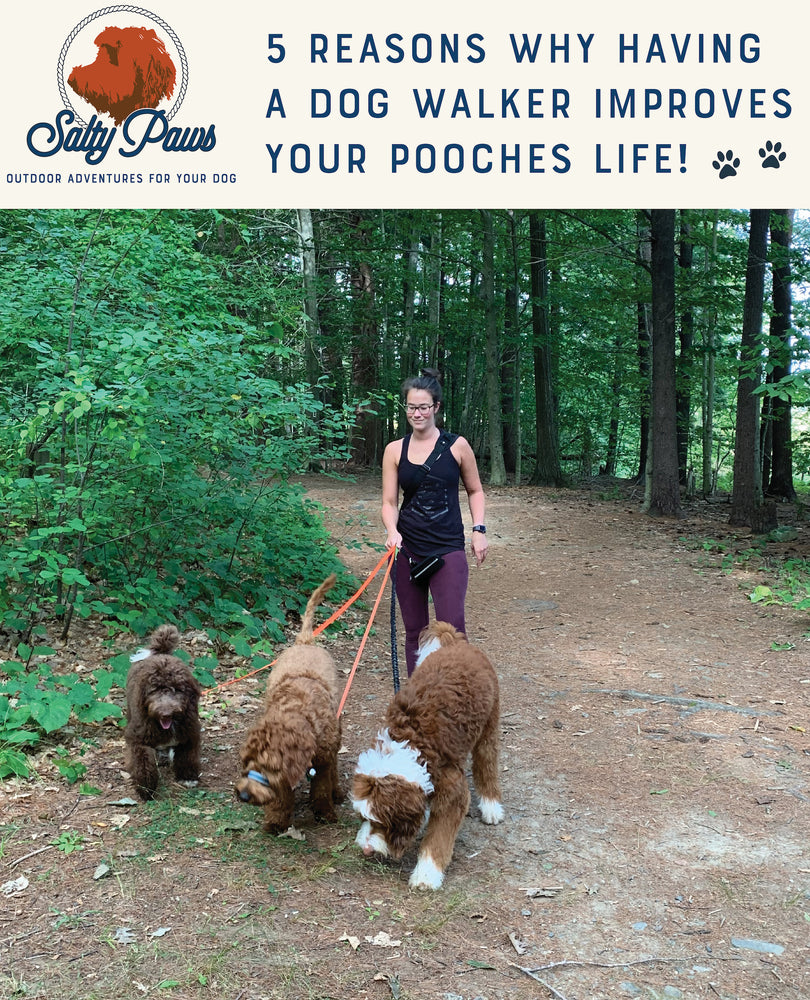 5 Reasons Why Having A Dog Walker Improves Your Pooches Life