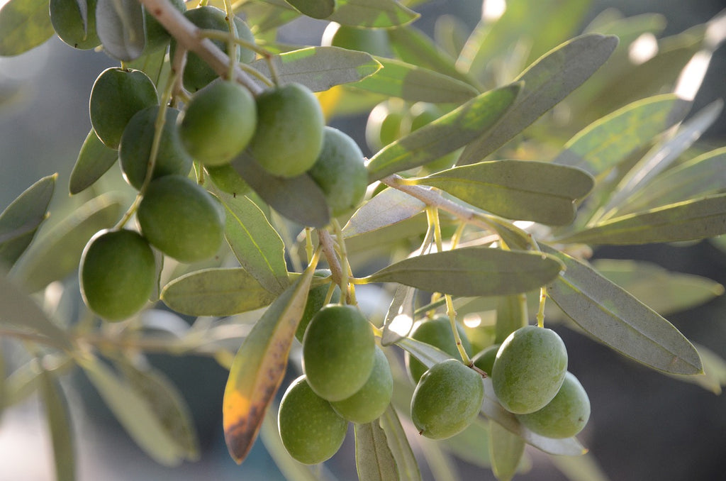 What Exactly Is Infused Olive Oil and How Does It Work?