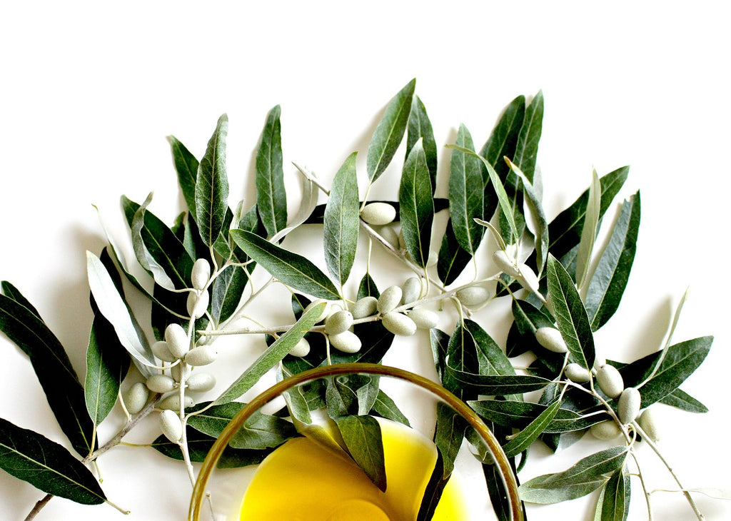 Hand Picking Your Olive Oil Is The Healthiest Way
