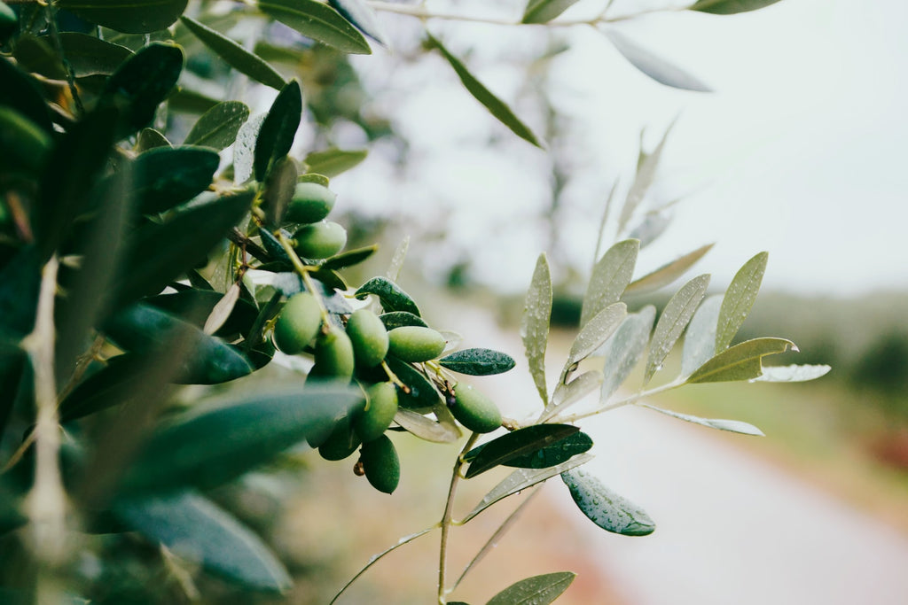 Great Pivotal Reasons To Use Olive Oil