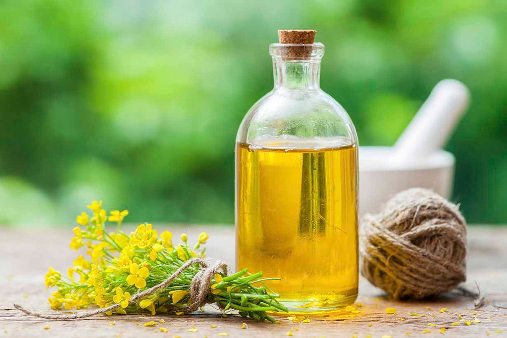 Health Tips: Canola Oil vs. Olive Oil: Which One Is Better For You?