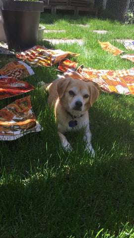 cute dog laying in grass with vintage fabrics