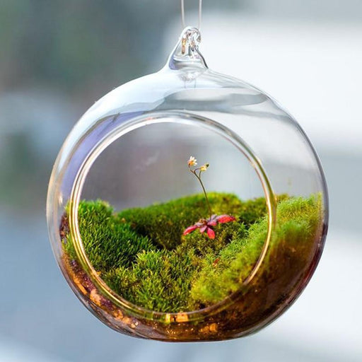 Decorative Urns - Clear Terrarium Ball Globe Shape Hanging Glass Flowervase