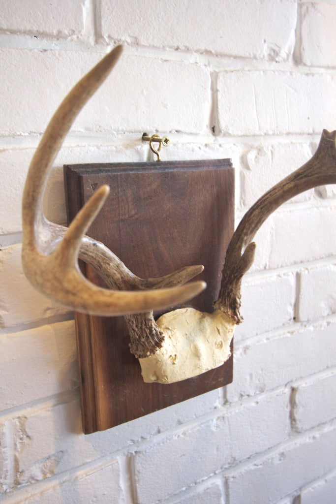 8 Point Mounted Antlers