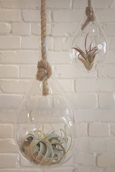 "10"" Hanging Glass Terrarium - Diamonds & Rust"