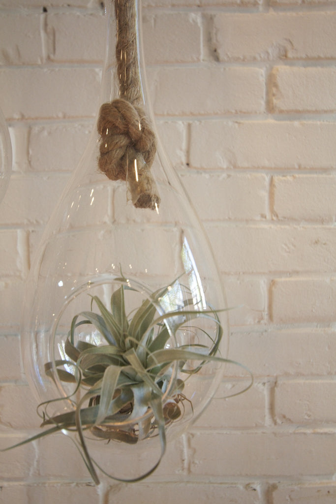 "13"" Hanging Glass Terrarium"
