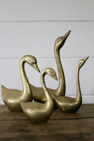 Brass Swan Collection