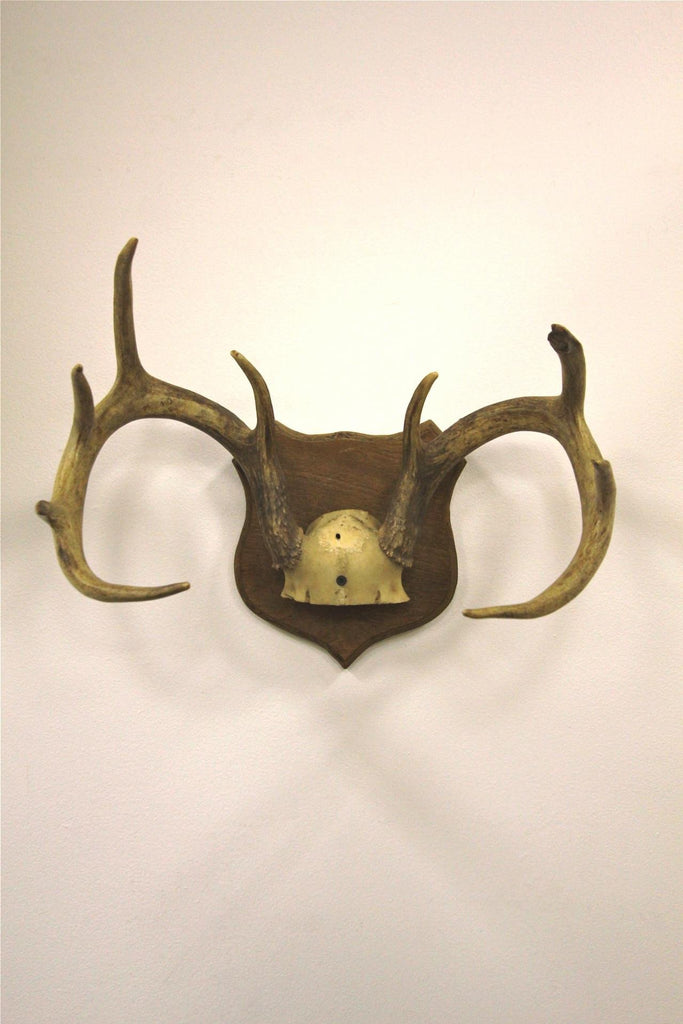 10 Point Deer Antlers Mounted