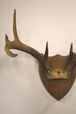 8 Point Deer Antler Mounted 3