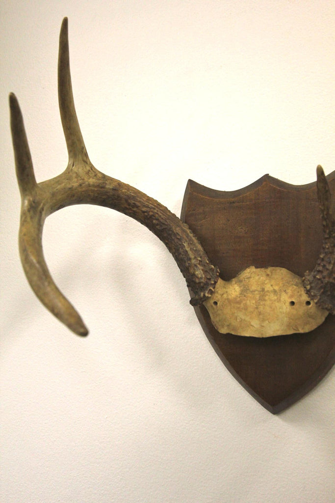 7 Point Deer Antlers Mounted