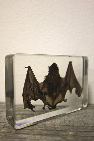 Bat Paperweight