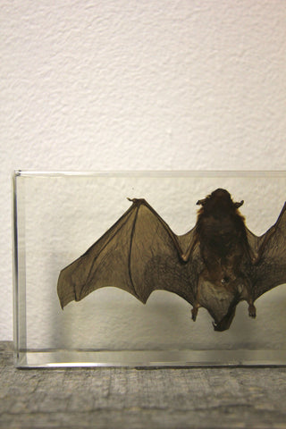 Medium Bat Paperweight