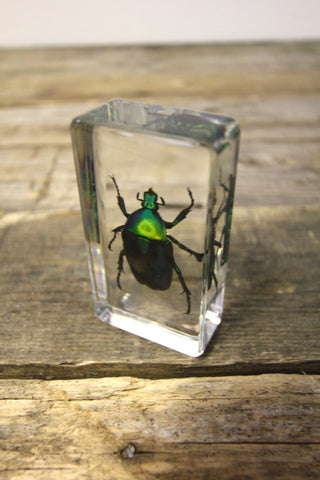 Green Rose Chafer Beetle