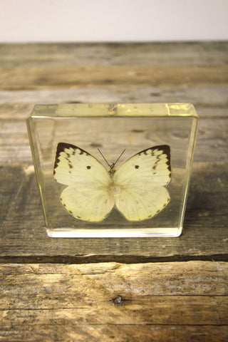 Lemon Migrant Butterfly Paperweight