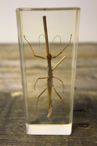 Stick Insect Paperweight