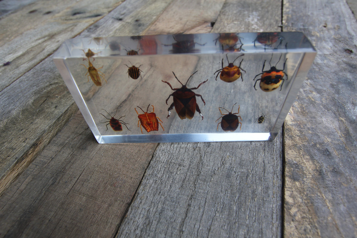 Bug Set Paperweight