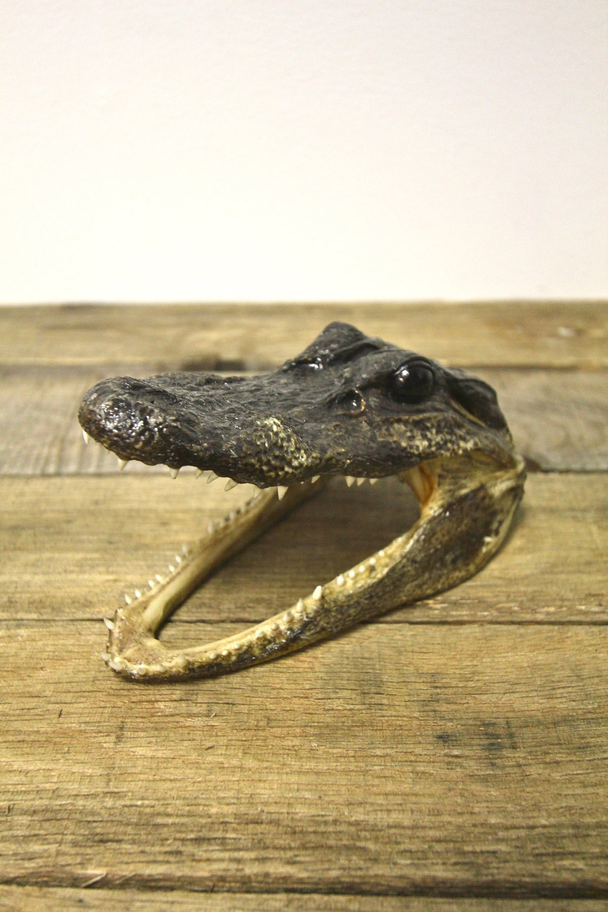 Vintage Alligator Head