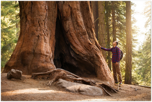 GELATO GLOBAL PRINT - Landscape Aluminum Print - Hiker in Sequoia National Park (next to Yosemite) in CA USA