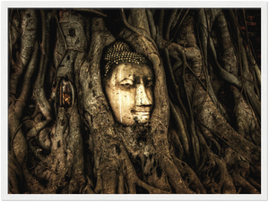 Gelato Global Print - Premium Semi-Glossy Paper Wooden Framed Poster - Trees show how ancient this Thai temple in Jungle is - Buddhism - Asia