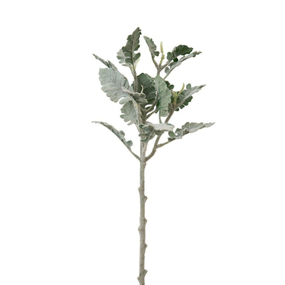 Dusty Miller Spray - Box of 2