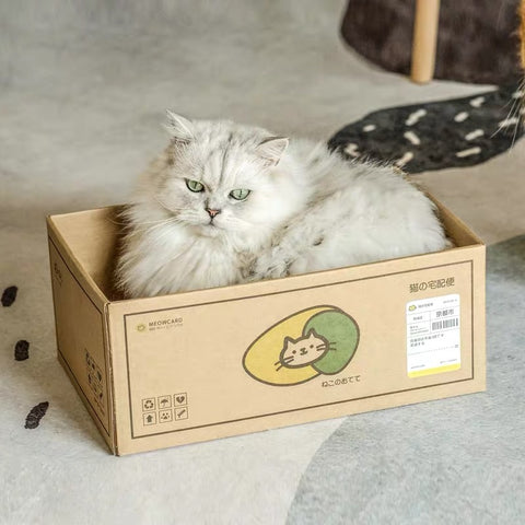 cat delivery box with scratcher board