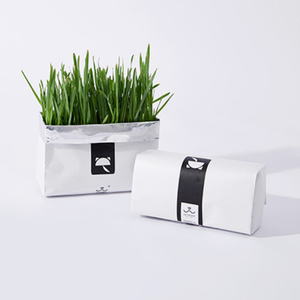 Cat grass by Vetreska (restock OTW)