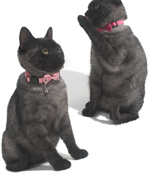 Mini Bow Cat safety collar (XS-S)