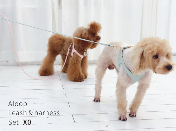 Arkika Aloop Leash & Harness (S-M)