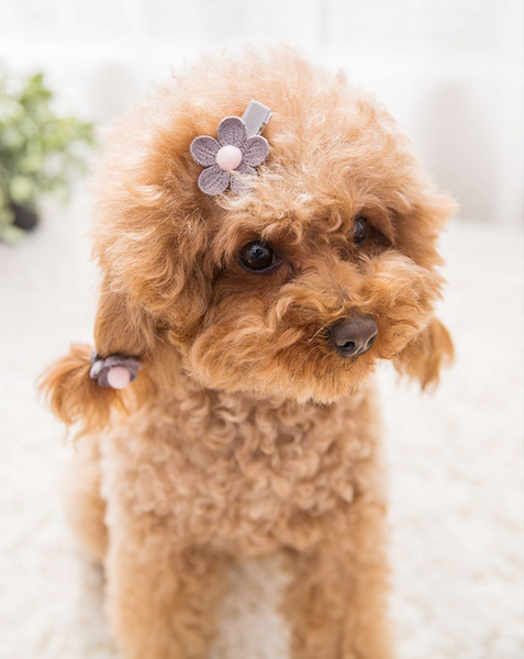 Pet hair accessories set of 10
