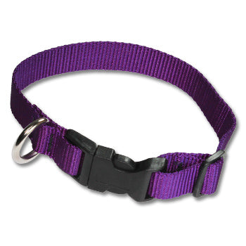 Nylon Dog Collar With Frequency