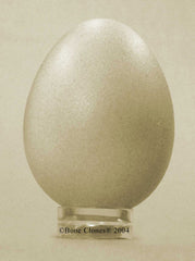 Barn Owl Egg (replica)