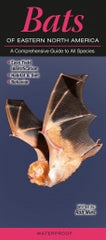 Bats of Eastern North America