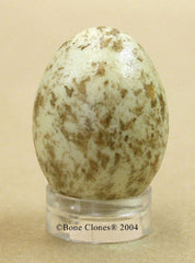 Northern Cardinal Egg (replica)