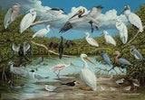 Poster - Florida Waterbirds