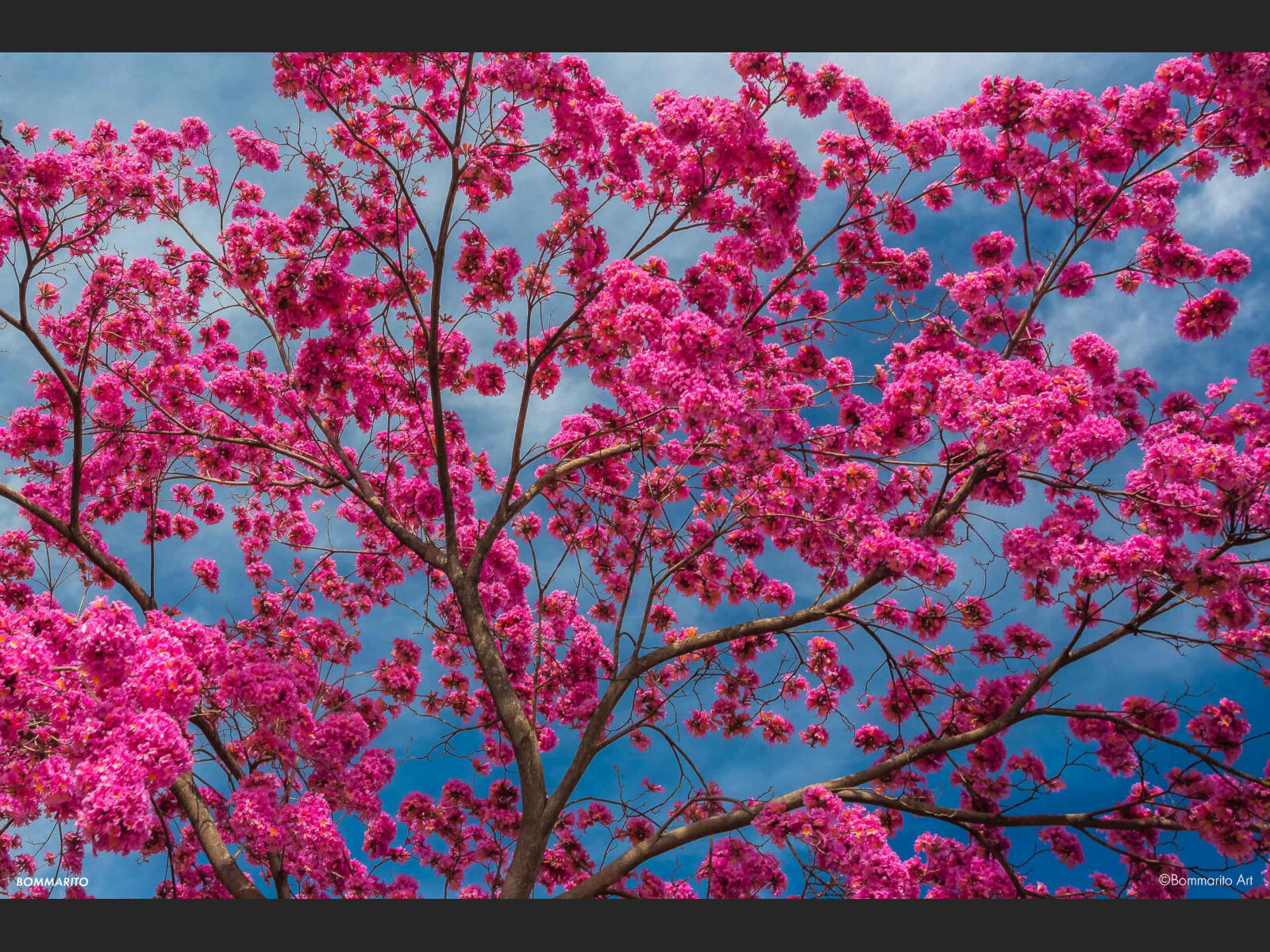 Color Blossom Storm