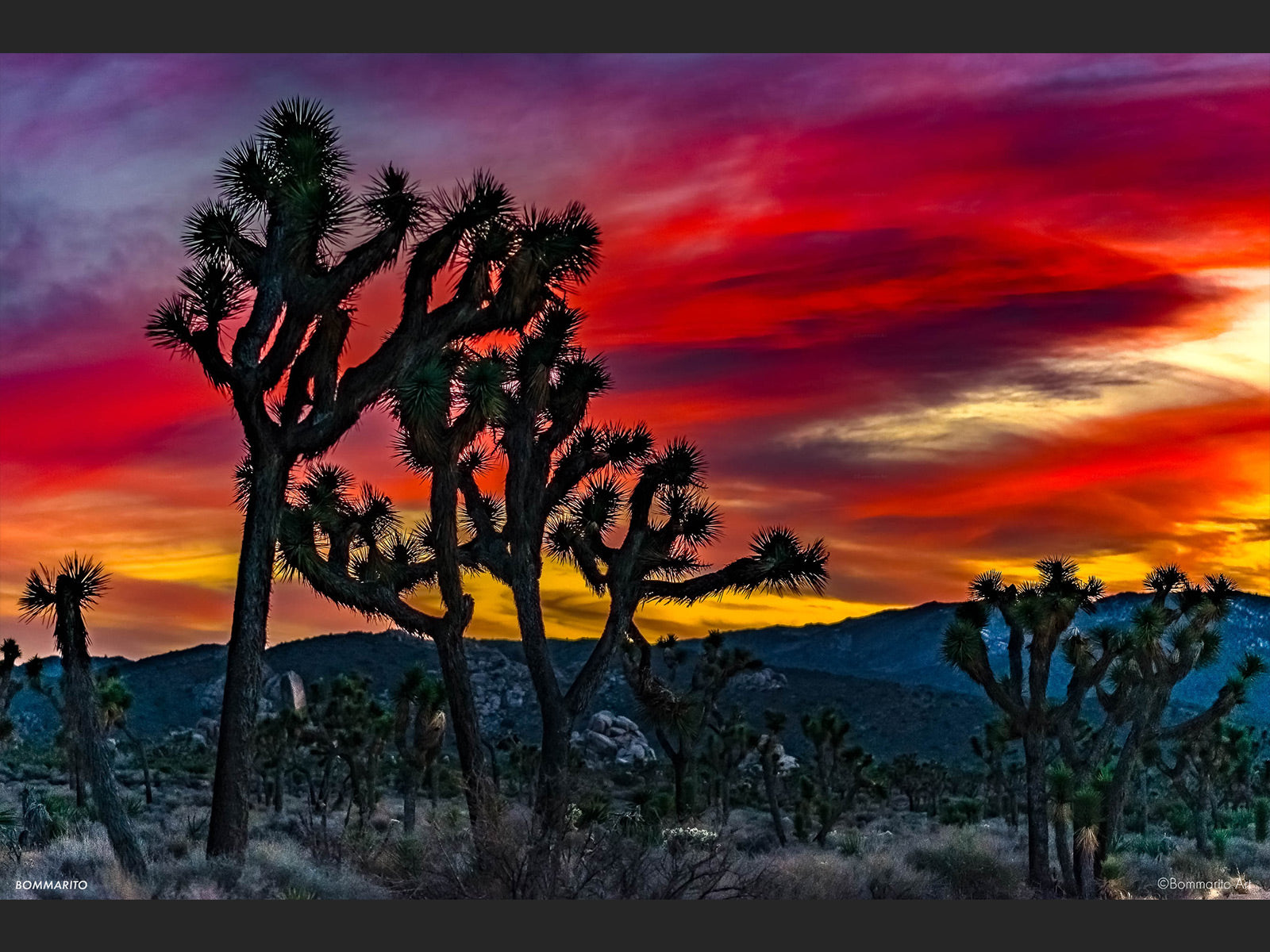 Joshua Tree Winter Sunset