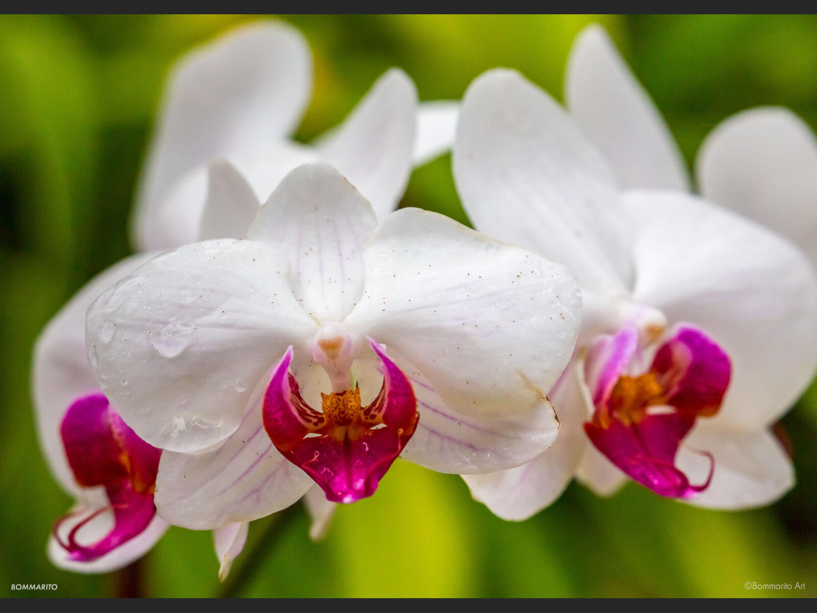 Orchid Forest