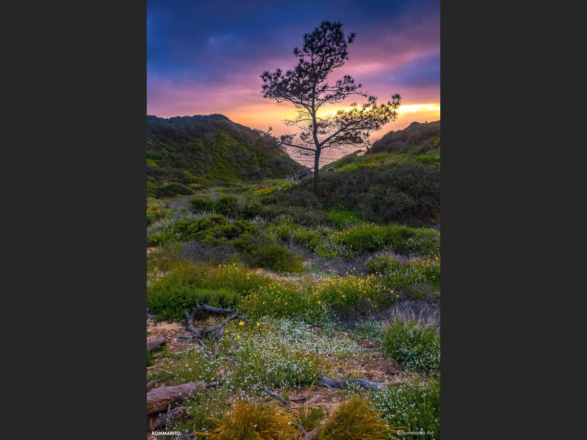 Torrey Superbloom Sunset