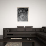 Black and White Lion- DIY 5D Diamond Painting - idiypaint