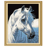 White Horse -40*50cm DIY Paint by Numbers Kits - idiypaint