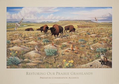 Restoring Our Prairie Grasslands