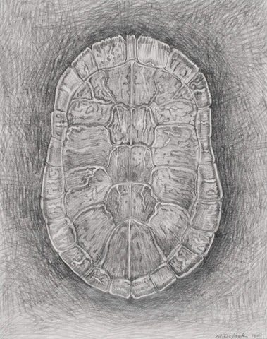 Carapace Study