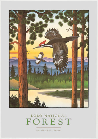 Lolo National Forest - Signed