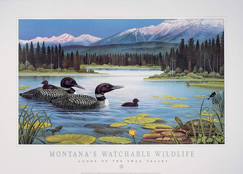 Loons of the Swan Valley - Montana's Watchable Wildlife