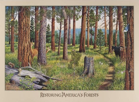 Restoring America's Forests - Small-signed