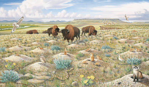 Restoring Our Prairie Grasslands - Note card