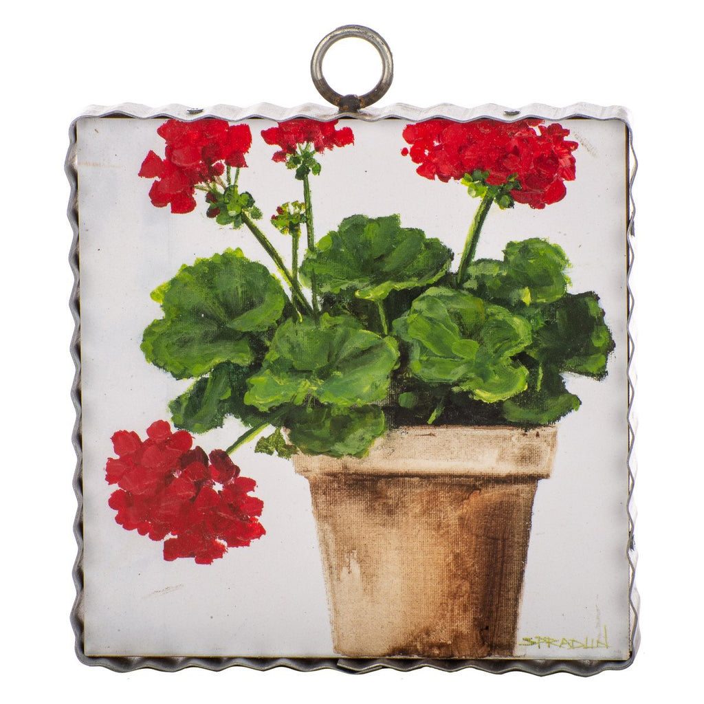 Gallery Pot of Geraniums