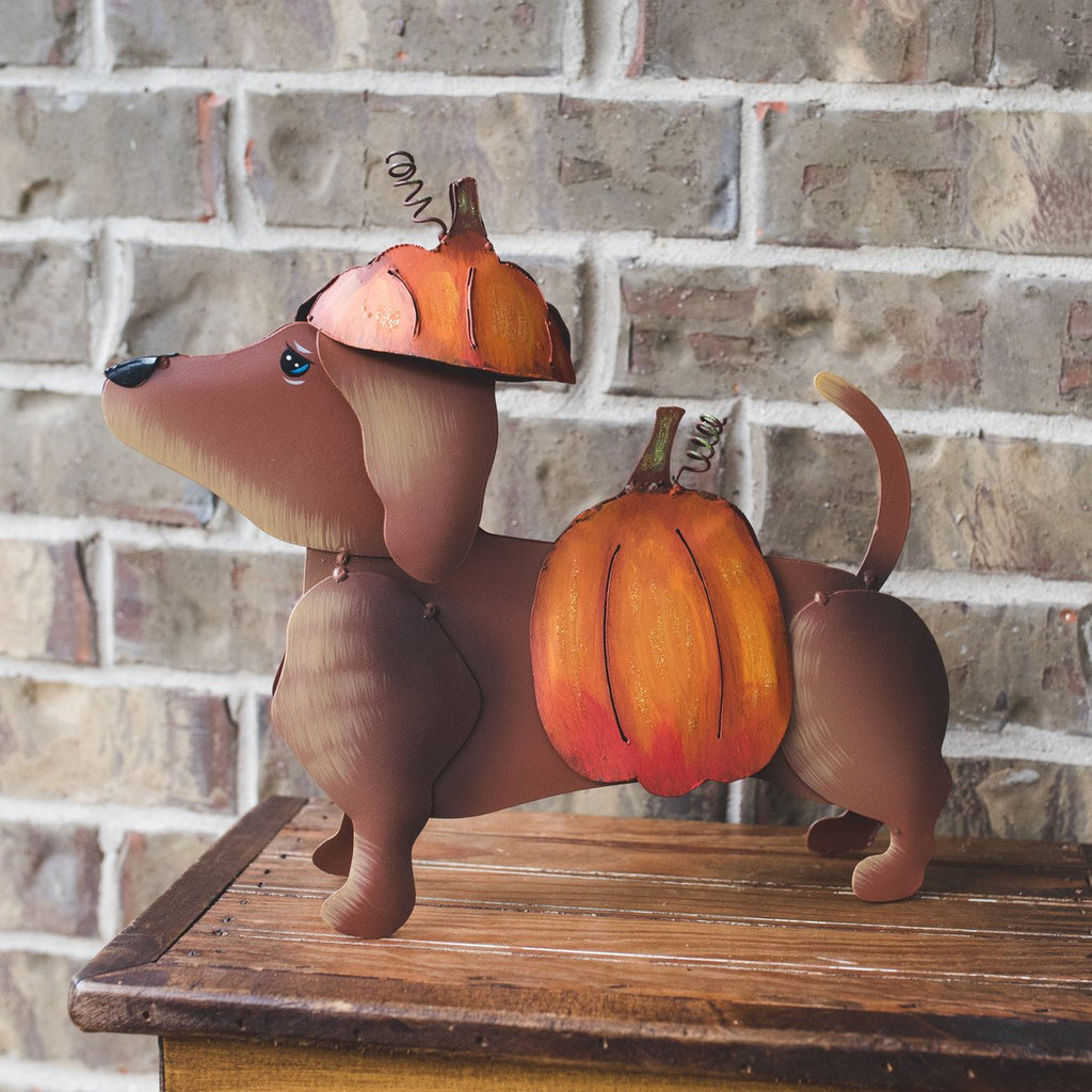 Dress Up Dachshund, Pumpkin