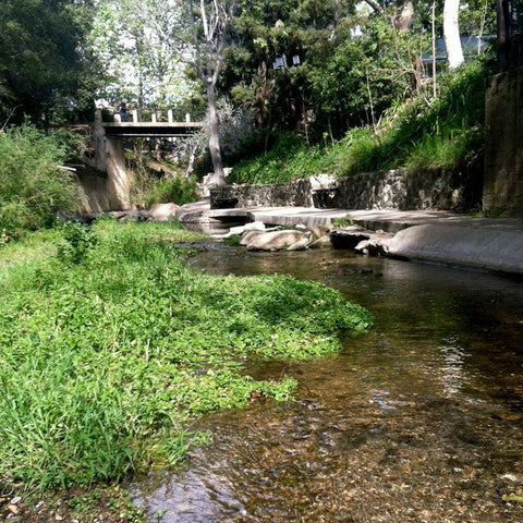 Creek Downtown SLO, Epic Big Sur Road Trip