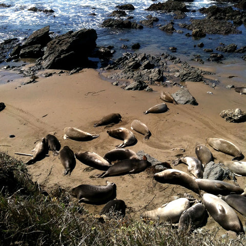Sea Lion Refuge, Epic Big Sur Road Trip